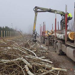 Saopštenje Zelenih Subotice povodom seče drveća na palićkoj obilaznici