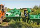 U velikoj akciji čišćenja smeća na Paliću učestvovalo 100 ljudi